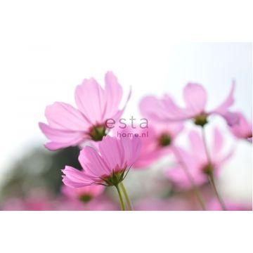 fotomural flores silvestres rosa de ESTA home