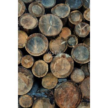 fotomural troncos de madera marrón de ESTA home