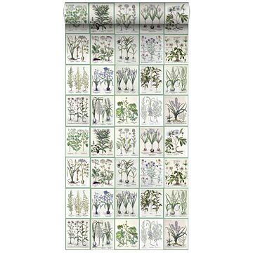 papel pintado XXL páginas de un libro botánico de flores y plantas gris claro cálido y verde de ESTA home