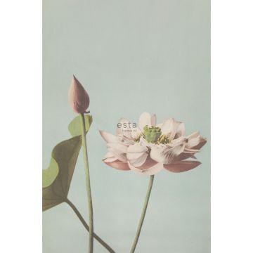 fotomural flor de loto rosa viejo de ESTA home