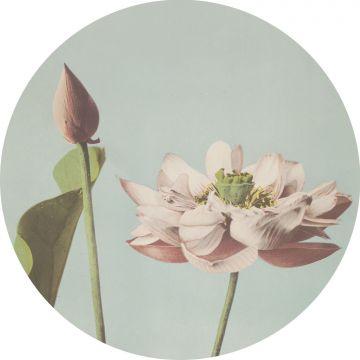 mural redondo autoadhesivo flor de loto rosa suave y azul agrisado de ESTA home