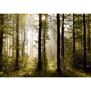 fotomural paisaje boscoso verde de Sanders & Sanders